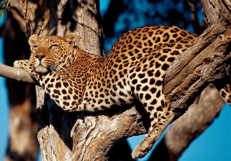 Sonderreise in Kleingruppe: NAMIBIA, mit Victoria Fälle • 16.10. – 31.10.2019 • € 4.985,-