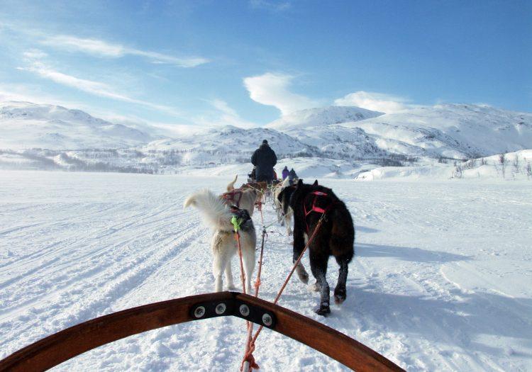 Winterzauber Schwedisch-Lappland  • Termine: Jänner bis März 2022 • € 2.145,-